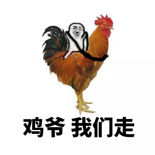 鸡爷,我们走表情图片
