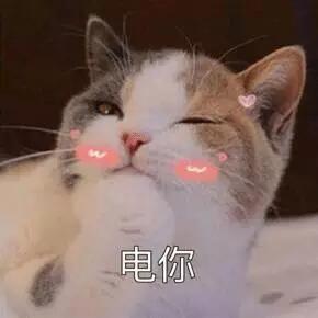 电你(小猫抛媚眼)表情图片