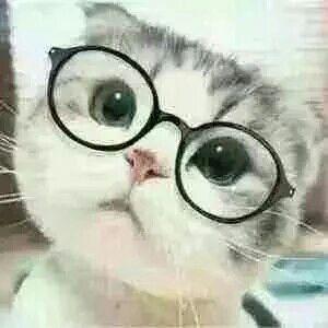 戴眼镜小猫萌萌哒歪脑袋表情图片