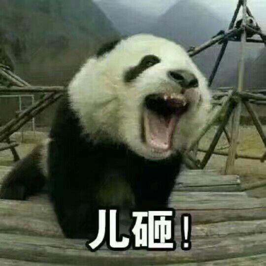 儿砸(大熊猫呼叫儿子)表情图片