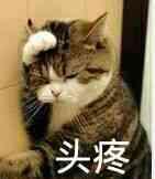 头疼!(小猫捂头)表情图片